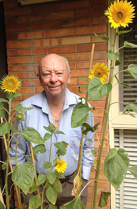 Grandpa tall sunflowers