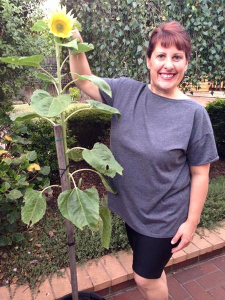 Olga sunflower
